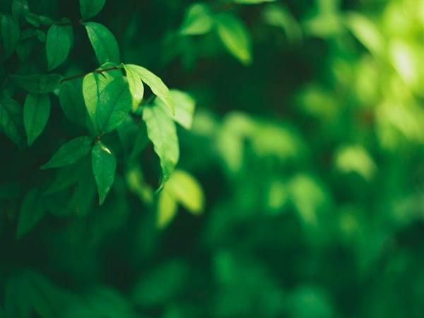 Plantillas de presentación verdes de SlidesCarnival
