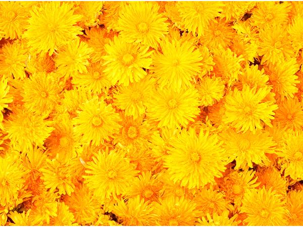 Plantillas de presentación amarillas de SlidesCarnival